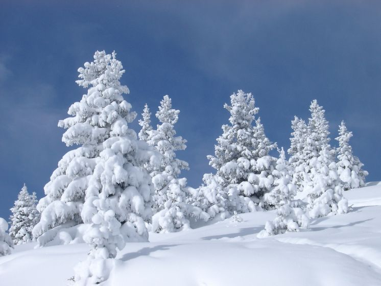 Still thinking about skiing over the Festive period?  Amazing Christmas and New Year offers just in....